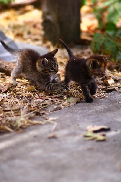 Aug Kitties and Kiddies (13).JPG