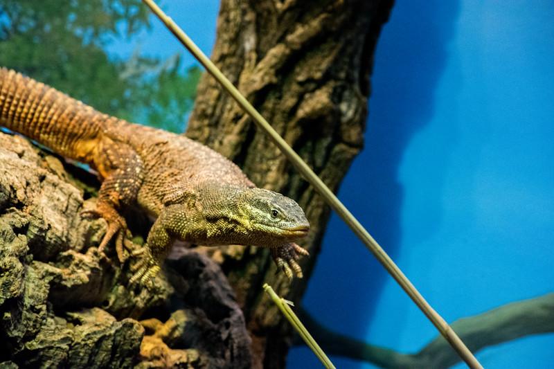 Springbreak - Brookfield Zoo