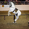 Medieval Times demostrates their Lipizzaners.