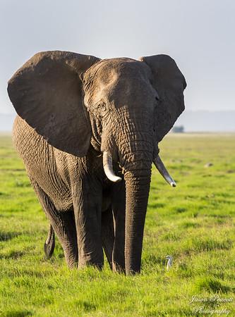 Amboseli NP and Safari, Kenya