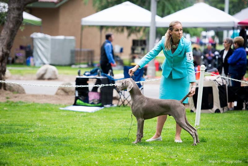 2019 Pasadena Kennel Club-8107.jpg