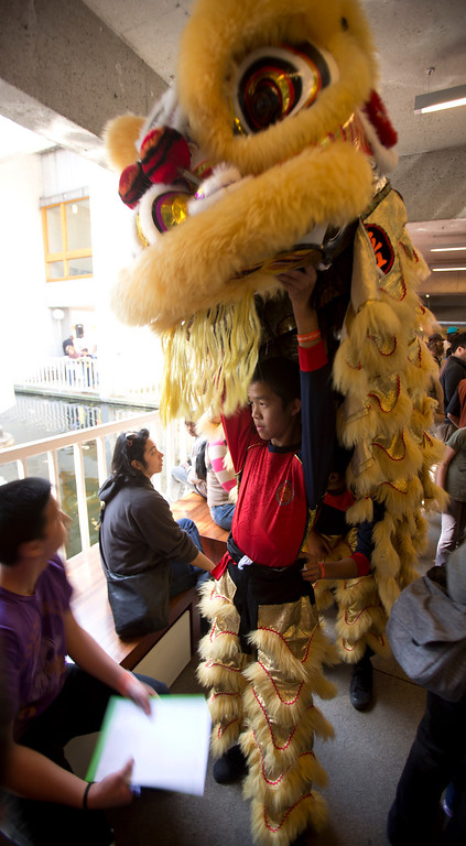 . Jansen Tan, a student at the Developing Virtue Secondary School of Ukiah, Calif. gets a breather from wearing the lion\'s head after performing the traditional Chinese New Year\'s dance, during the Oakland Museum of California\'s Lunar New Year celebration, Sunday, Feb. 17, 2013 in Oakland, Calif. (D. Ross Cameron/Staff)