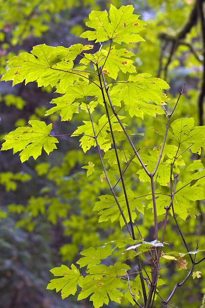 Wet & Green Pacific Northwest
