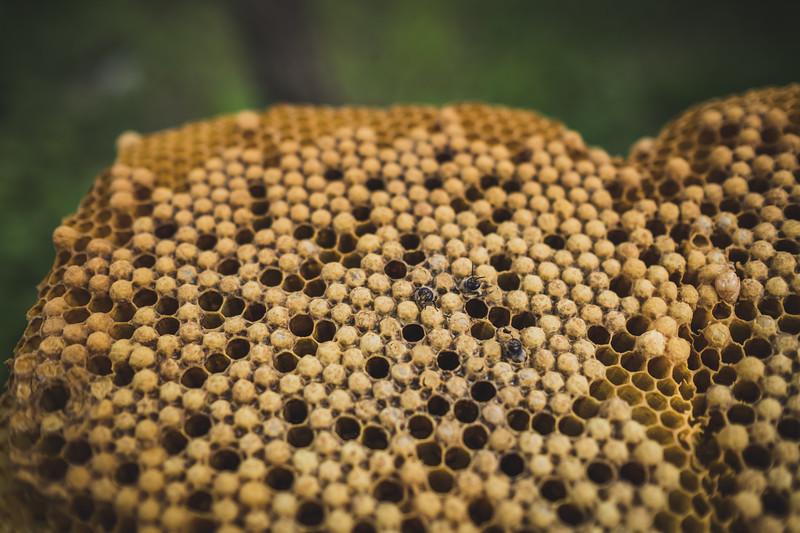 pszczoly-ofm-9747.jpg