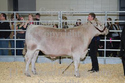 2013 Klein ISD Steer Show Class 3