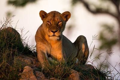 Sabi Sabi, South Africa 2012