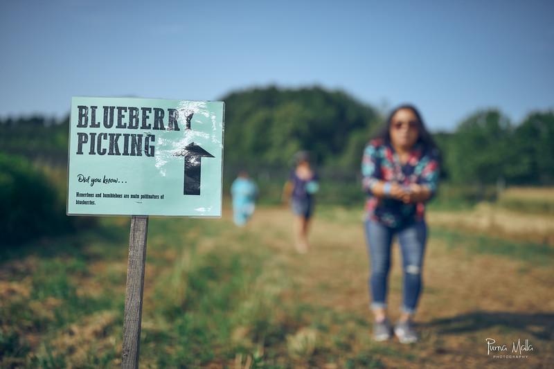 Cider Hill Farm 49.jpg