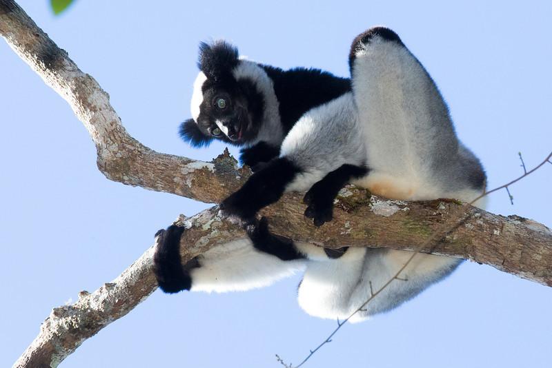 Madagascar_2013_FH0T9438.jpg