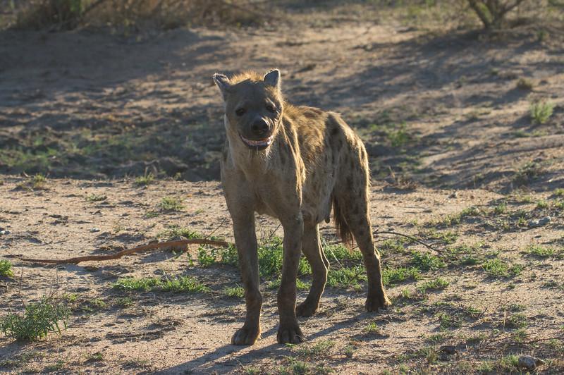 terrifying hyena