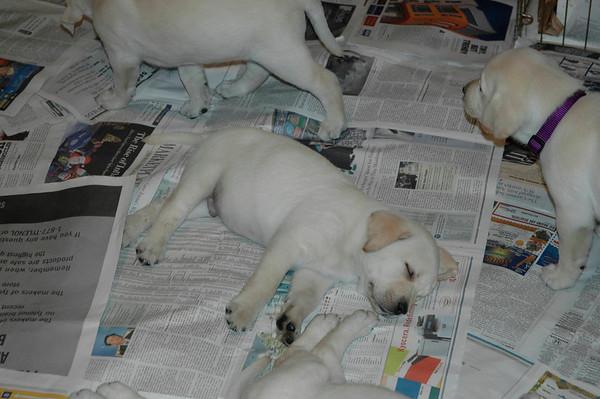 Stephens Puppies - 2007