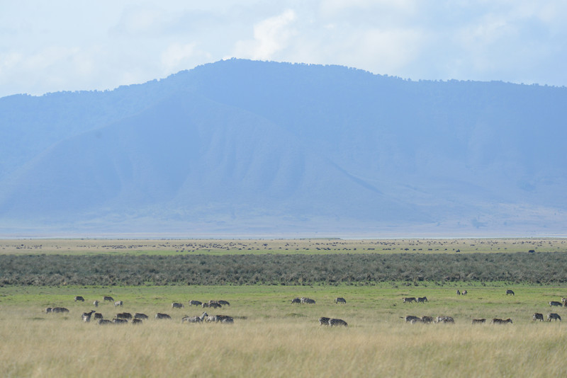 East Africa Safari 410.jpg