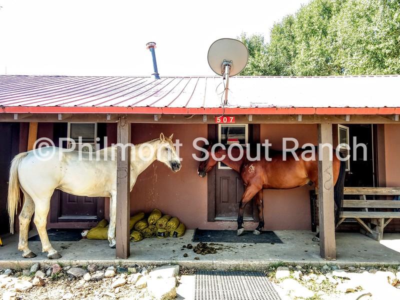 2nd_2018_Porch Views_RebekahShorb_Porch horse_Cattle headquarters_380.jpg