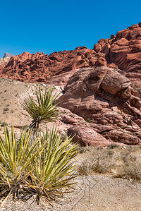 Left corner with desert cacti and red sandstone rocks