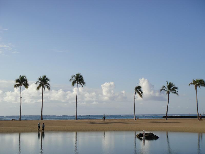 Palms Over Lagoon