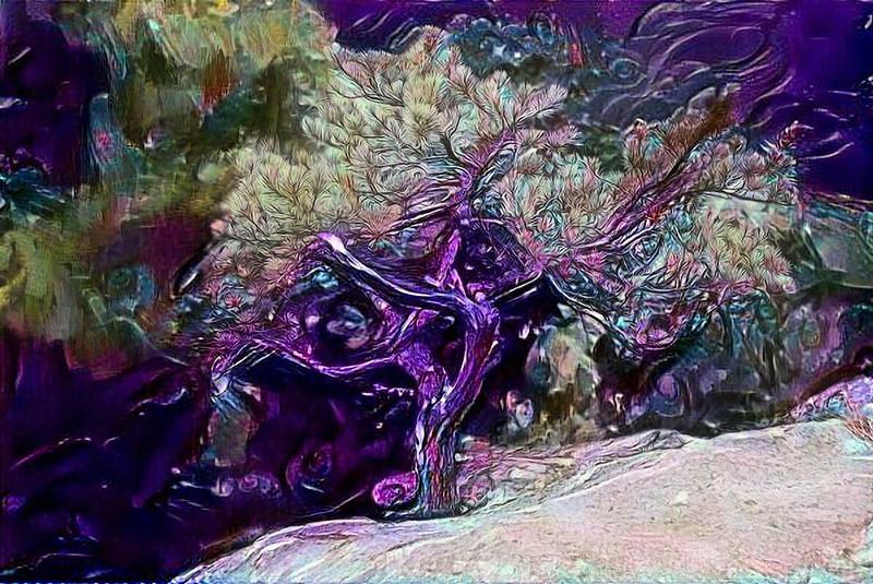 treeBRMsjd_7992.JPG