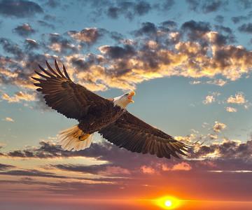 Eagles at Waterside