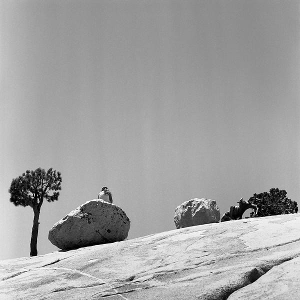 Yosemite_052018018.jpg