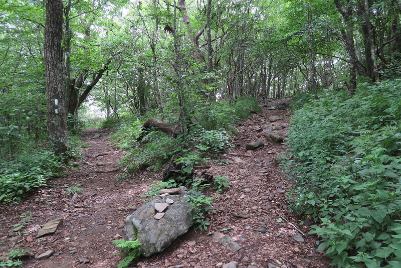 Appalachian Trail-Standing Indian Summit Spur Junction