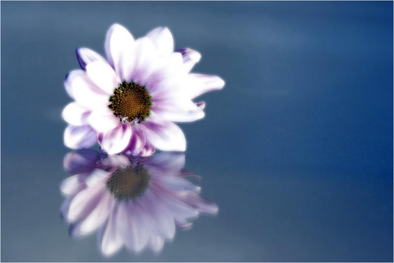 20101021_20101107_Flower_09.jpg