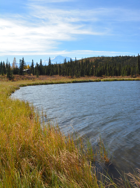 Denali-National-Park-129.jpg