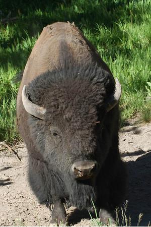 (June 2007) Montana and Wyoming Trip