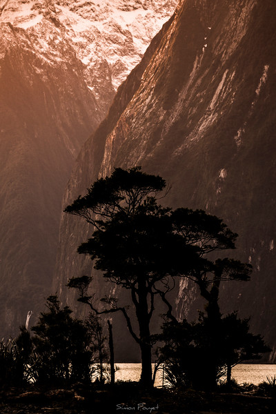 Milford Sound Tree II.jpg