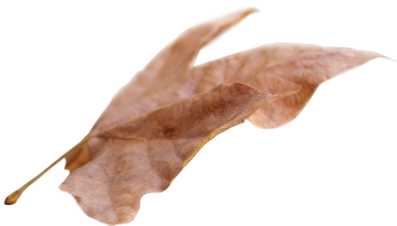 Leaf 23.png