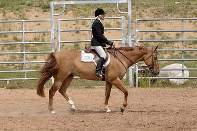 English Equitation 19 & over