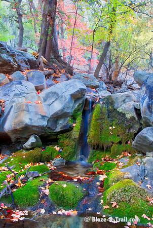 Ramsey Canyon Fall Colors (Sierra Vista, AZ)