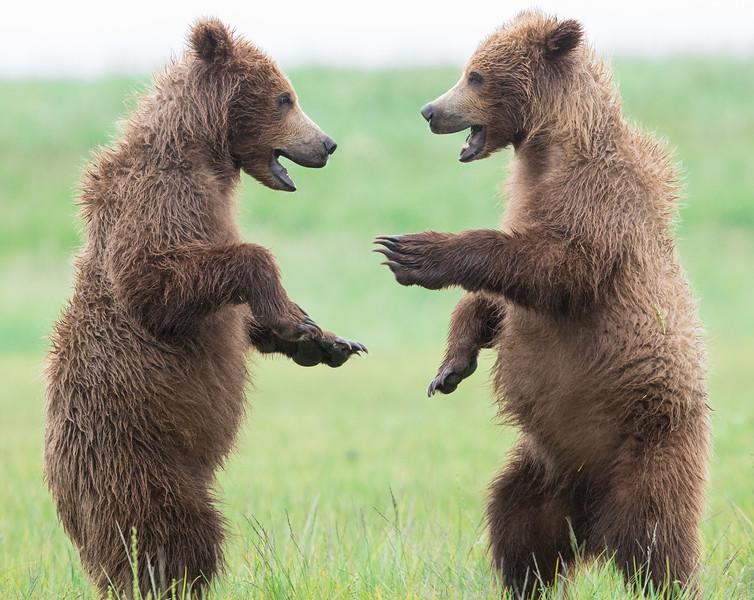 alaska-bears-14-2.jpg