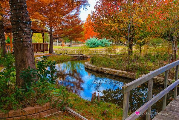 Clark Gardens Fall 2013