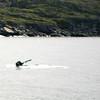 Humpback Whales, St. Anthony, Newfoundland - 4