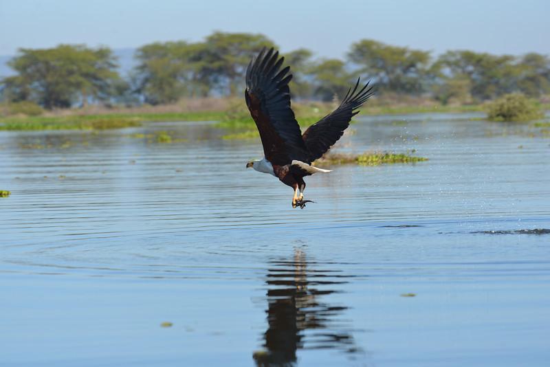 East Africa Safari 150.jpg