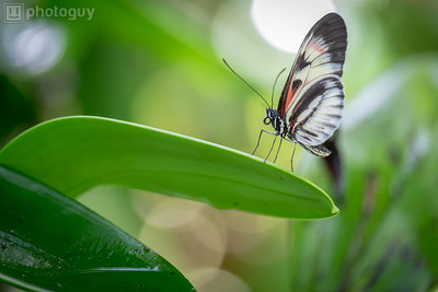 20140628_BUTTERFLY_WORLD (6 of 28)