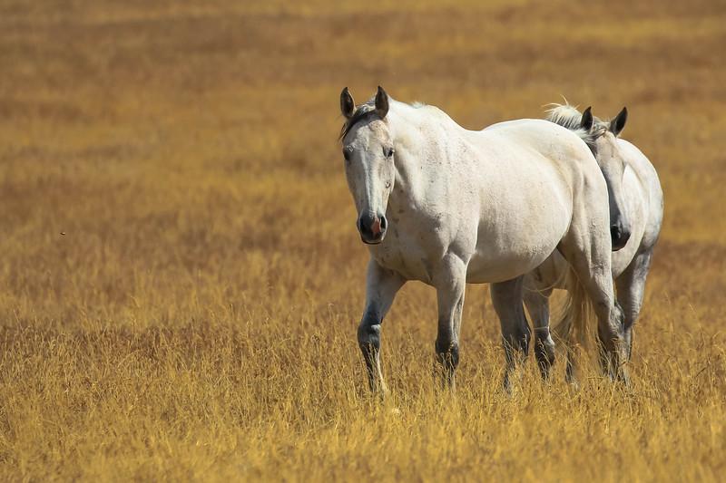 Lyn's ponies.jpg