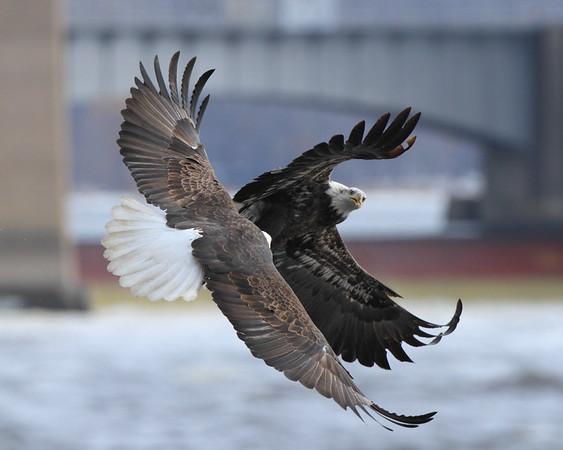 Eagles 2015