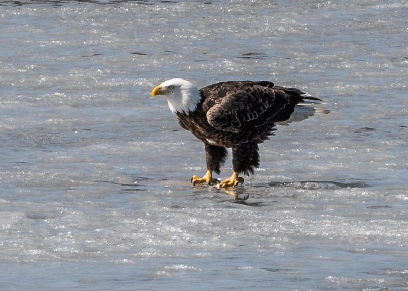 03-17-2020-eagles.jpg