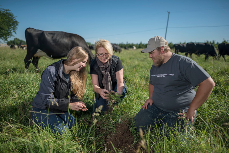 Cindy Daley (center) shows the soil conditions to animal Science majors Kate Carlson, 22 (left) and Clint Lundell, 24 (right) in the dairy cows pasture at the University Farm that is developing regenerative soil program that makes efforts for sustainability farming possible on Wednesday, June 14, 2017 in Chico, Calif.  (Jason Halley/University Photographer)