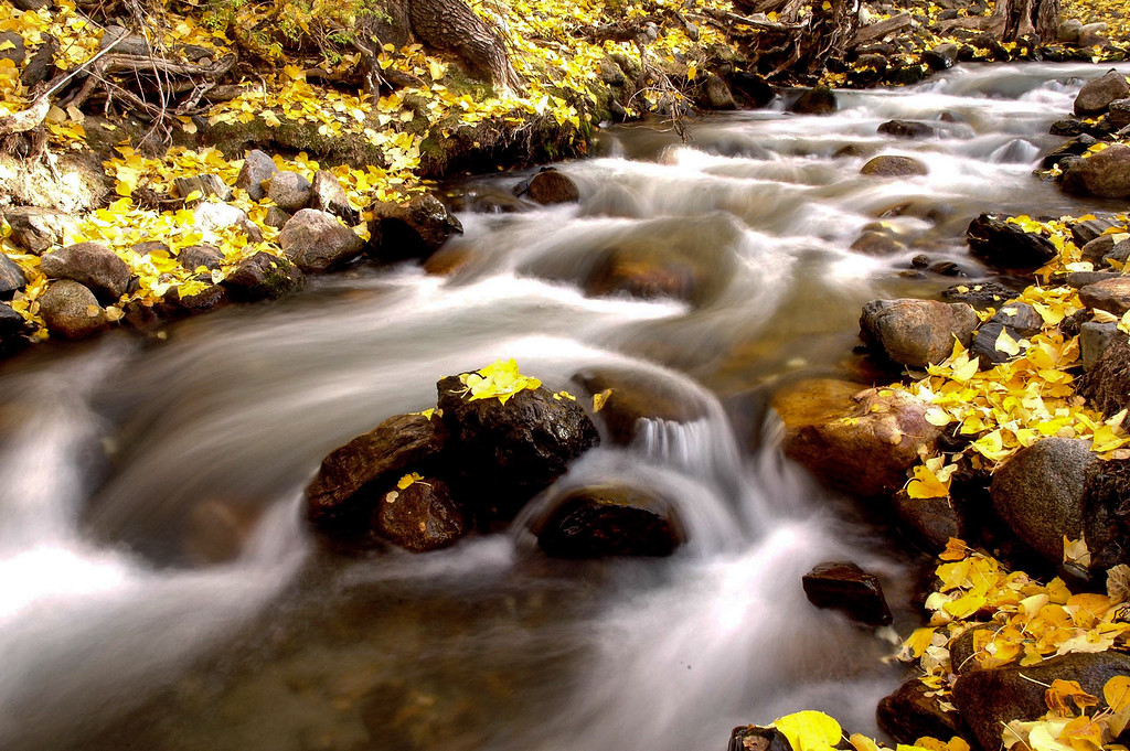 Golden leaves in creek, McGee Creek, CA
