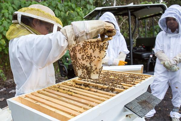 Hawaii - UH Hilo Beekeeping