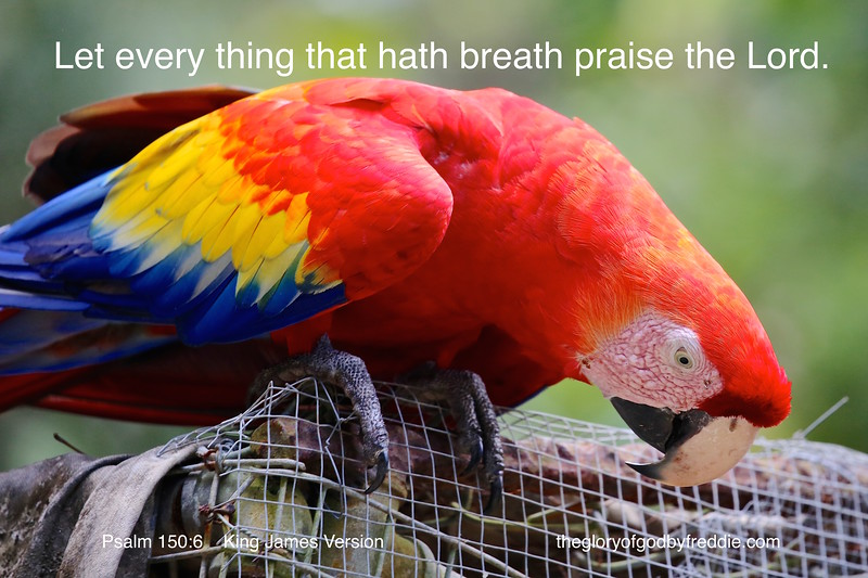 Psalm 150-6  f.JPG