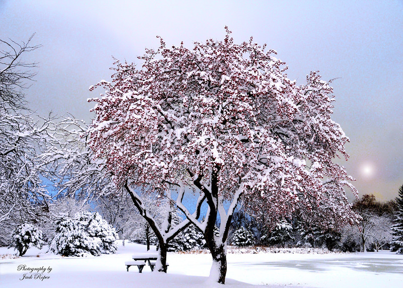 Winter Tree copy.jpg