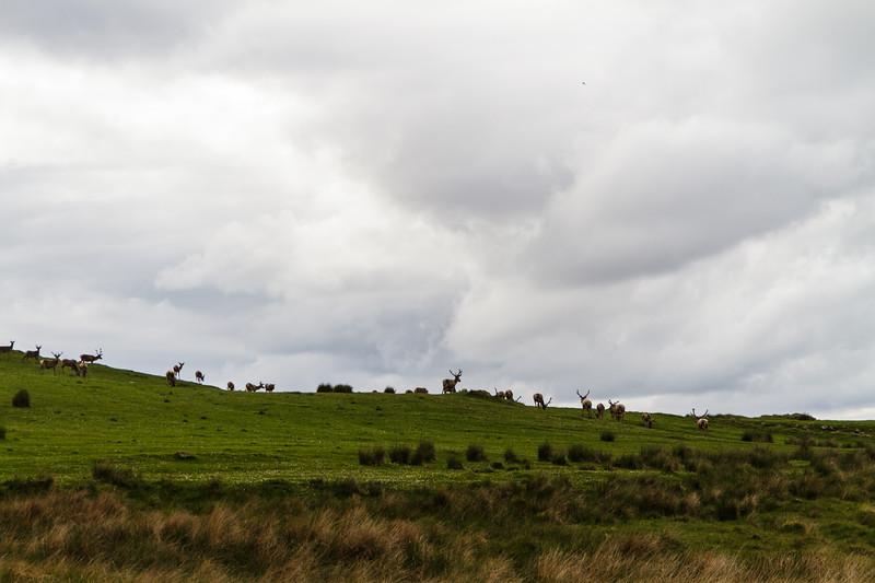 Scrabster to Isle of Sky - 19.jpg