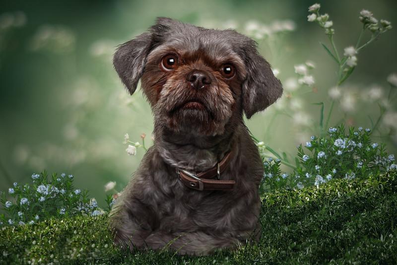 doggy-4.JPG