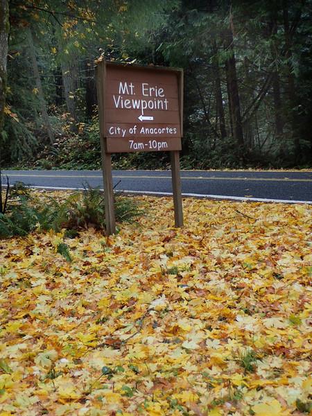 PB030105 Mt Erie winter Fall forest.jpg