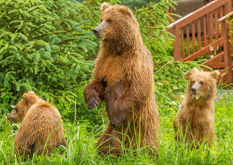 2015-07-16_Bears_Canon7D_4268.jpg