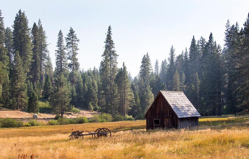 cabin in the brush.jpg