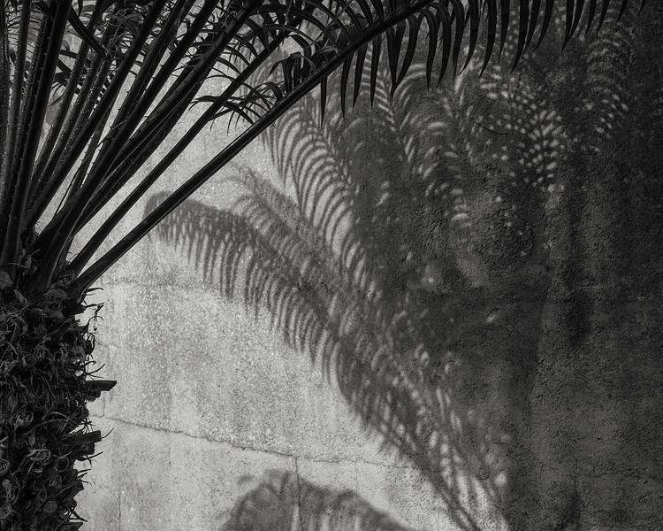 palm shadows; ses salines, mallorca