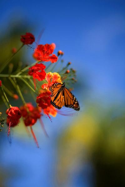 Botanical Garden, Flowers & Butterflies