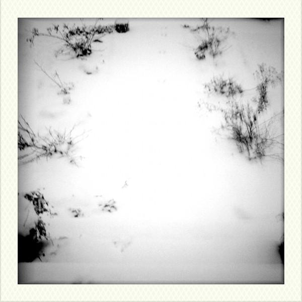 2011-01-11-07-15-38-304.jpg